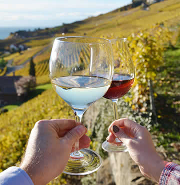 A couple raising their glasses of red and white wine in a Provençal vineyard