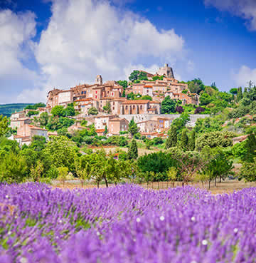 Famous lavender fields in Provence, with a hilltop town in the background watching over the stunning scenery