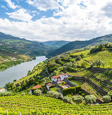 An aerial view of rolling hills covered in vineyards, with the Douro River cutting through the valley