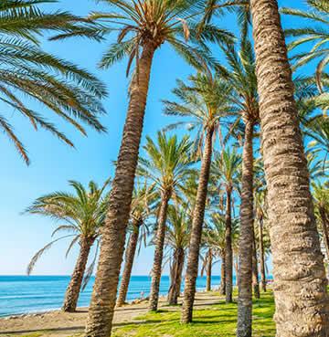 Palm trees and golden sands in Torremolinos