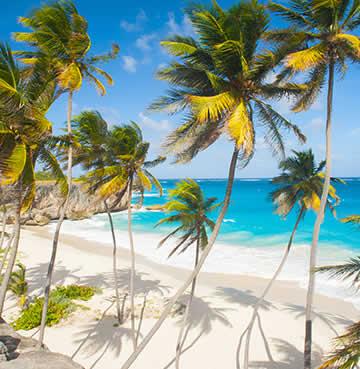 Swaying palm trees at Crane Beach, Barbados
