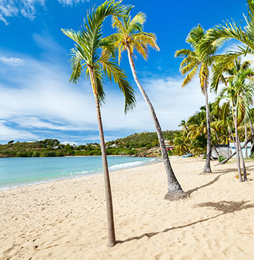 The palm tress and white sand of Carlisle Bay in Antigua