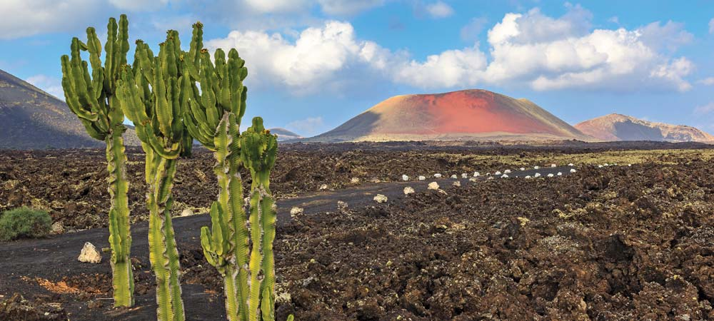 Cactus and volcanic landscape in Lanzarote