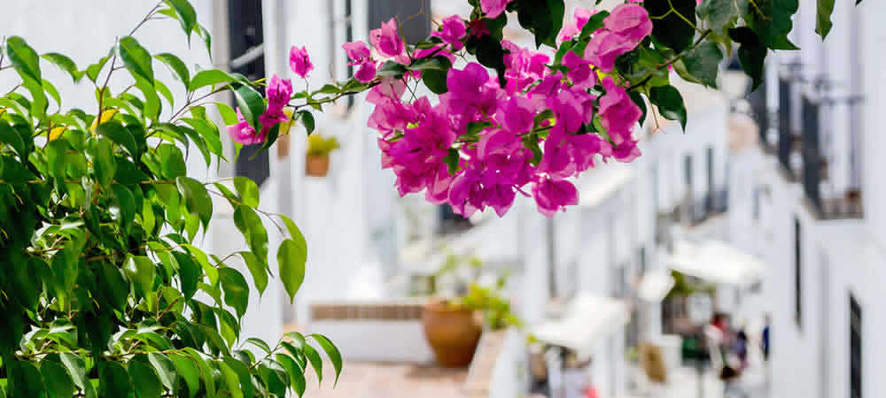 Beautiful pink bougainvillea in Andalucia