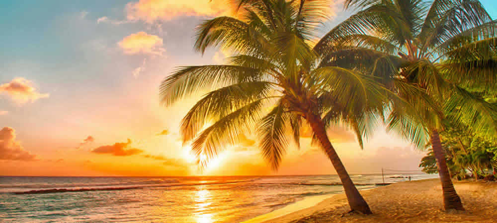 A sunset and palm trees on a white sandy beach in the Caribbean