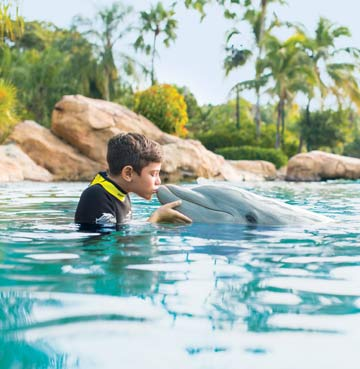 Dolphin Lagoon at Discovery Cove
