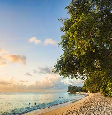 Beautiful Bajan beach, with trees running along the shore