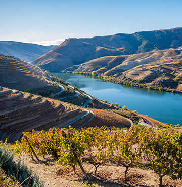 Velvet rolling hills covered in vineyards in the UNESCO World Heritage Site of Douro Valley, Portugal