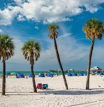 Palm-fringed sandy beach with parasols and umbrellas to rent at Clearwater Beach. Pier 60 can be seen in the distance.