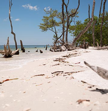 Untouched beach at Lovers Key State Park, framed by mangrove forests.