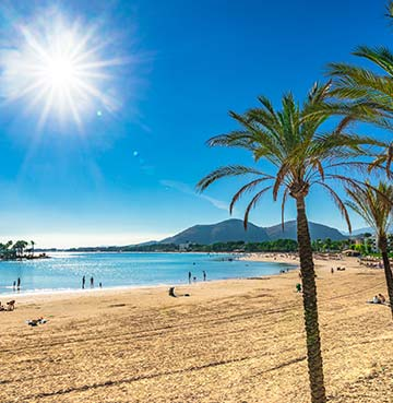 Palm trees and golden sands of Playa d'Alcudia, Mallorca