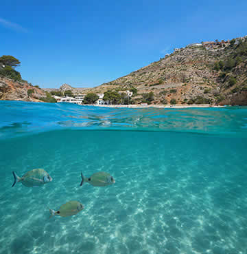 Beneath the crystalline waters of la Granadella beach lie a small flurry of fish. Above the waves, beautiful natural scenery surrounds the cove, set under brilliant blue skies.