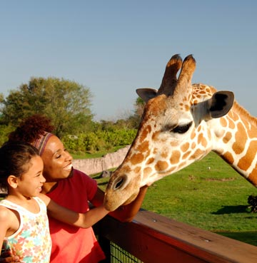 A woman and young girl petting a giraffe