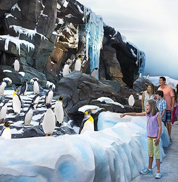Antartica: Empire of the Penguin at SeaWorld