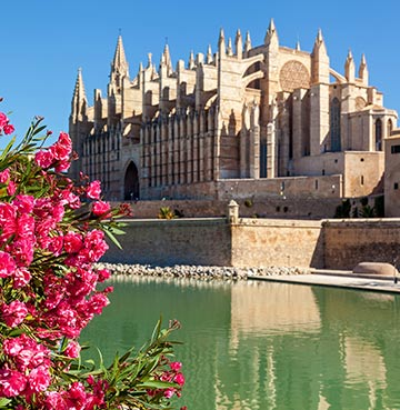 Beautiful pink flowers frame Le Seu Cathedral across the river.