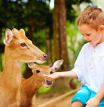 A young boy feeding deer by hand at the zoological park of Lloc de Menorca