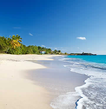A beautiful beach backed by exotic palm trees in Antigua, Caribbean
