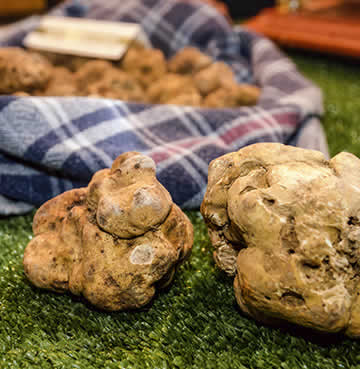 The infamous Istrian truffle
