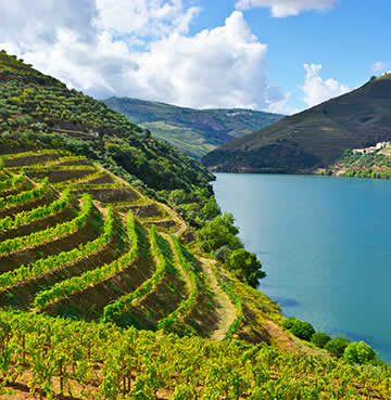 The gorgeous Duoro Valley and Duoro River in Portugal. The vineyard terraces carpet the valley.