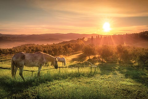 Horses grazing in Tuscan fields at sunset