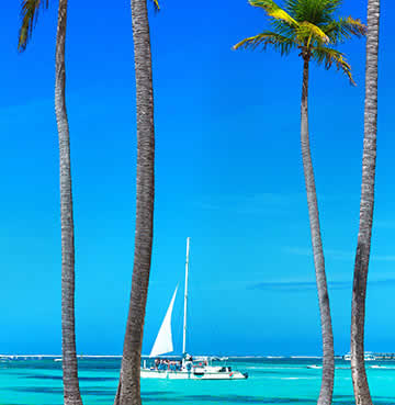 A picture of palm trees on a white sanded beach. The beach overlooks the sea, with a yacht in the distance.
