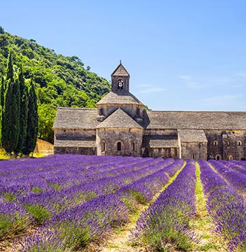 Vibrant purple lavender fields in the South of France. An old rustic farmhouse sits in the background underneath brilliant blue skies.