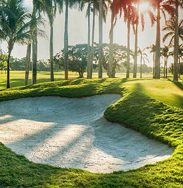 A bunker surrounded by palm trees on a Florida Golf Course