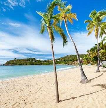 Palm trees and powder white sands in Antigua