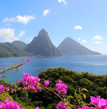 UNESCO World Heritage Site of The Pitons in Soufrière, St Lucia. Beautiful pink flowers frame the volcanic plugs and brilliant blue Caribbean waters.