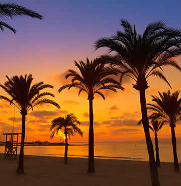 Golden sunset with palm tree silhouettes at the beach