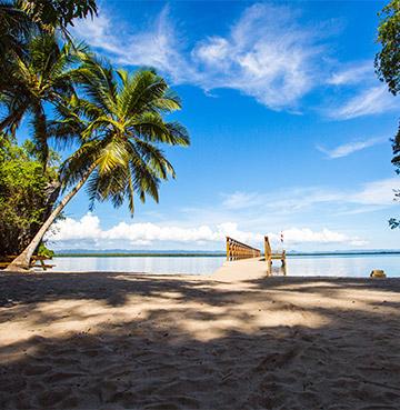 Beach and palm trees at Los Haitises National Park