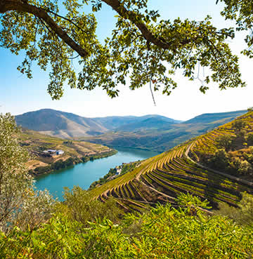 Verdant vineyards line the Douro River in Douro Valley