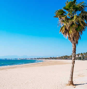 Powder-white, sandy beach with a palm tree blowing in the summer breeze