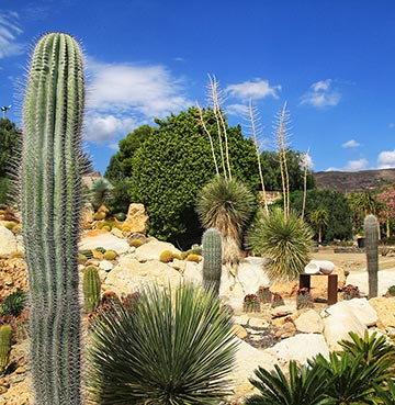 Cacti and other vegetation in the desert landscapes of Cabo de Gata