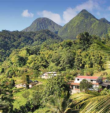Lush rainforest and mountains in Jamaica