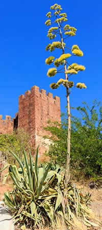 Excursions and Places of interest in Silves Image