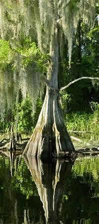 Minute Clinic Marco Island Florida